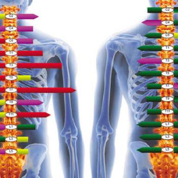 Nerve System Scans